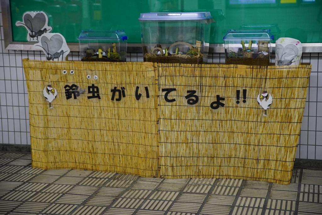 【千日前線】鶴橋駅で鈴虫が鳴いています